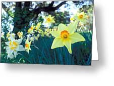 Daffodils And The Oak 2 Greeting Card