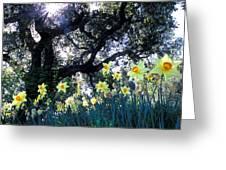 Daffodils And The Oak Greeting Card