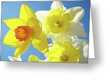 Daffodils Art Print Floral Sky Bouquet Daffodil Flower Baslee Greeting Card