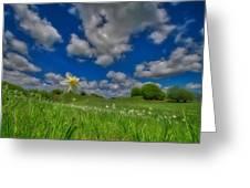 Daffodils Blossimg At Cavalla Plains 2017 V - Fioritura Dei Narcisi Al Pian Della Cavalla 2017 Greeting Card