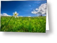 Daffodils Blossimg At Cavalla Plains 2017 Vi - Fioritura Dei Narcisi Al Pian Della Cavalla 2017 Greeting Card