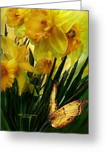 Daffodils - First Flower Of Spring Greeting Card