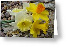 Daffodils Flower Artwork 29 Daffodil Flowers Agate Rock Garden Floral Art Prints Greeting Card