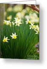 Daffodils In A Bunch Greeting Card