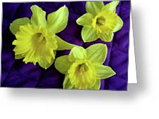 Daffodils On A Purple Quilt Greeting Card