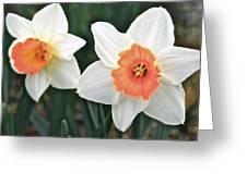 Daffodils Orange And White Greeting Card