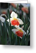 Daffodils Spring Is Here Greeting Card