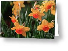 Daffodils Greeting Card by Tracy Hall