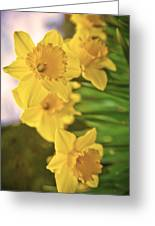 Daffodils V2 Greeting Card
