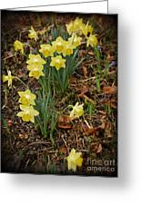 Daffodils With A Purple Flower Greeting Card
