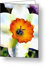 Daffy Down Dilly Greeting Card