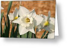 Dafodil168 Greeting Card