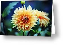 Dahlia Beauty Greeting Card