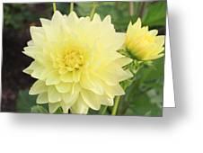 Dahlia Blossom Yellow Greeting Card