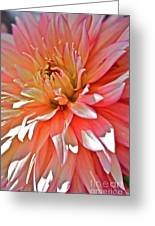 Dahlia Blush Greeting Card