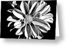 Dahlia Close Up - B And W Greeting Card
