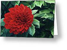 Dahlia Dawn Greeting Card