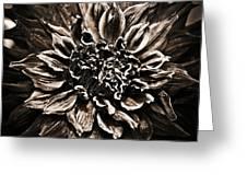 Dahlia De Pierre Greeting Card