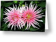 Dahlia Duo Greeting Card