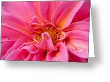 Dahlia Emily Greeting Card