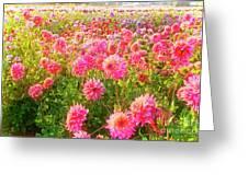 Dahlia Farm Greeting Card