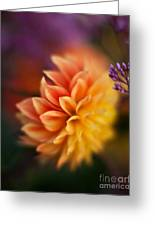 Dahlia Fireball Greeting Card