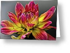 Dahlia Flame Greeting Card