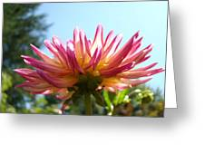 Dahlia Floral Garden Art Prints Canvas Summer Blue Sky Baslee Troutman Greeting Card