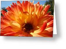 Dahlia Floral Orange Yellow Flower Botanical Art Prints Canvas Baslee Troutman Greeting Card