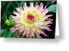 Dahlia Floral Pink Yellow Flower Garden Baslee Troutman Greeting Card