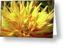Dahlia Flower Art Collection Giclee Prints Baslee Troutman Greeting Card