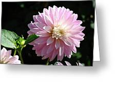 Dahlia Flower Art Pink Dahlias Giclee Art Prints Baslee Troutman Greeting Card