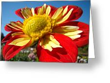 Dahlia Flower Art Prints Canvas Red Yellow Dahlias Baslee Troutman Greeting Card