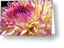 Dahlia Flower Art Sunlit Floral Prints Baslee Troutman Greeting Card