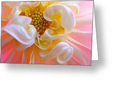 Dahlia Flower Macro Pink White Dahlias Floral Baslee Troutman Greeting Card