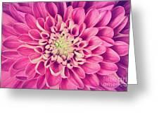 Dahlia Flower Petals Pattern Close-up Greeting Card