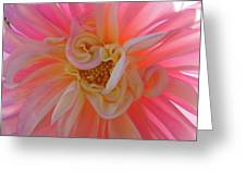 Dahlia Flower Sunlit Pink White Dahlia Garden Floral  Greeting Card