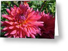 Dahlia Flowers Garden Art Prints Baslee Troutman Greeting Card