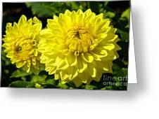 Dahlia Garden 3 Greeting Card