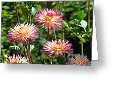 Dahlia Garden Floral Pink Yellow Botanical Landscape Baslee Troutman Greeting Card