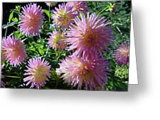 Dahlia Group Greeting Card