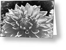 Dahlia In Black And White 2 Greeting Card