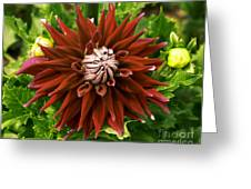 Dahlia In Bloom 18 Greeting Card