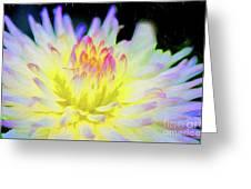 Dahlia In The Glow Greeting Card