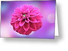 Dahlia On Color Greeting Card