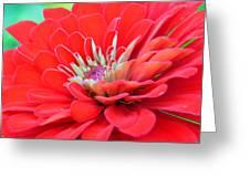 Dahlia Petals Greeting Card
