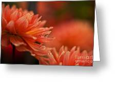 Dahlia Rainshower Greeting Card
