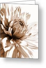 Dahlia Sepial Flower Greeting Card