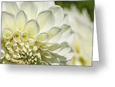 Dahlia Study 4 Greeting Card