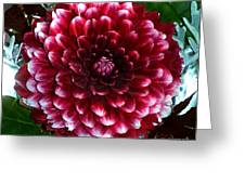 Dahlia Supreme Greeting Card